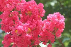 Summer blooms.