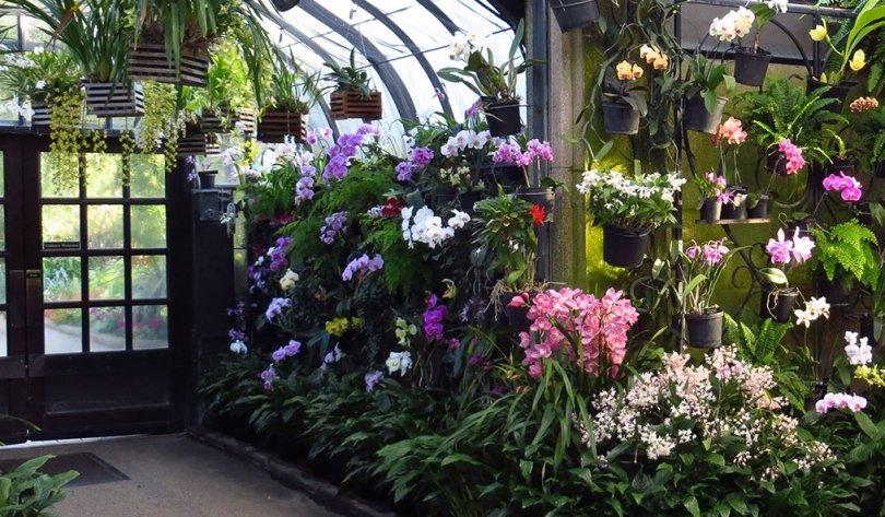 "A Peek Inside Longwood's ""Orchid Extravaganza"""