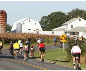 Amish_Farm_and_Cyclists (1)