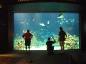 Tank of Fish