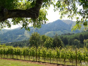 David Hill Vineyards