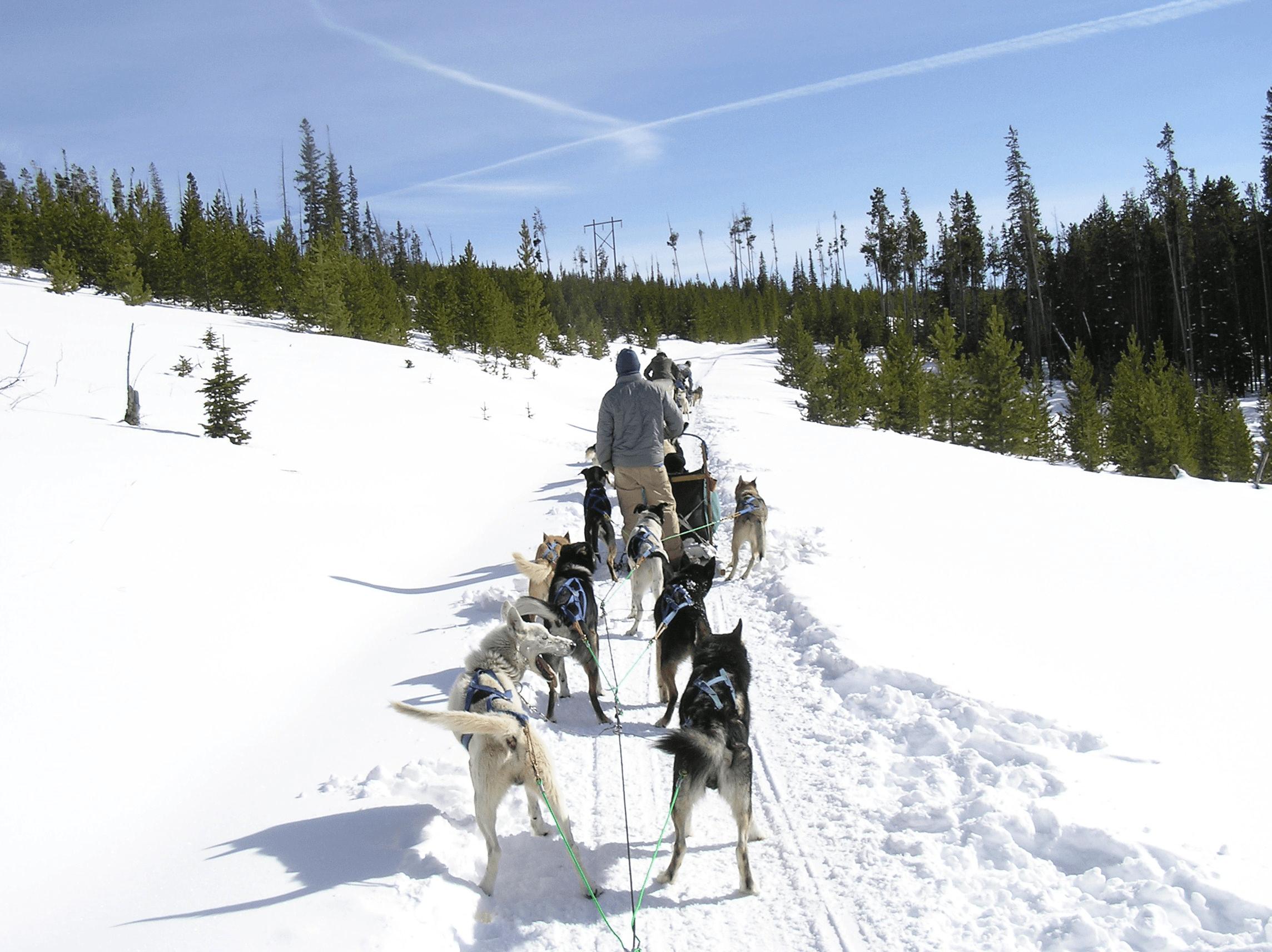 Sled Dog Adventure