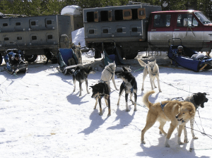 Doggie Bus with kennels in background