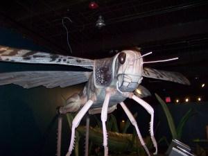 Robotic Bugs
