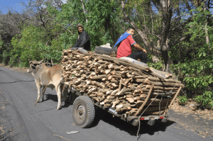 Boys driving a wood-laden oxcart on a country road to Cerro Negro volcano.