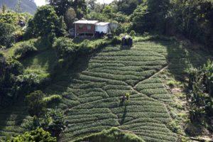 Hillside Farms of Trinidad