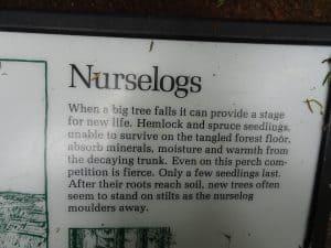 Nurselogs